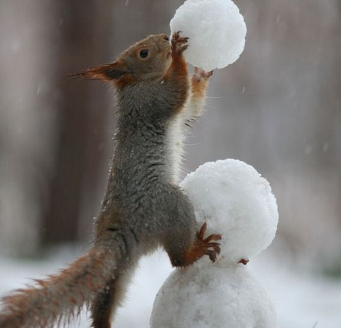 snowball will save you